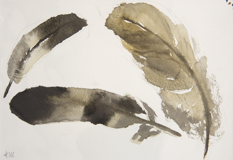 feather-illustrations-watercolour