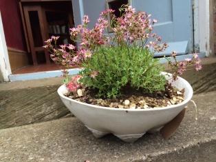Garden Ceramics, RHS, stoneware planter
